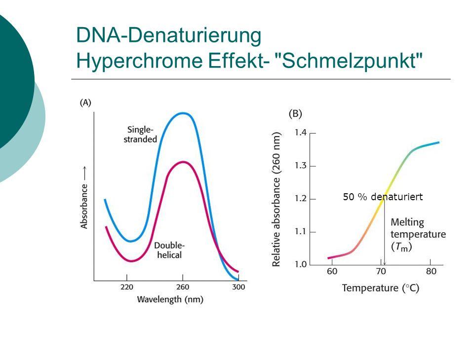 DNA-Denaturierung Hyperchrome Effekt-
