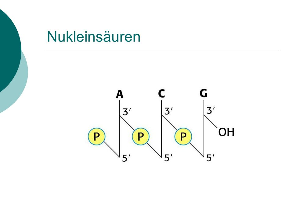 Polymerase- Kettenreaktion (PCR) Voet Biochemistry 3e © 2004 John Wiley & Sons, Inc. Page 114