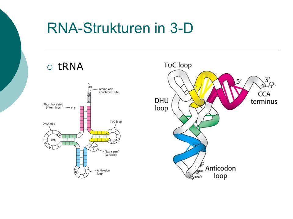 RNA-Strukturen in 3-D tRNA