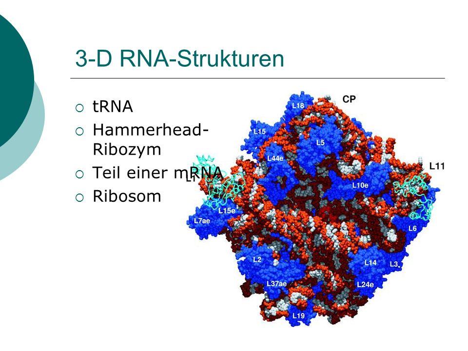 3-D RNA-Strukturen tRNA Hammerhead- Ribozym Teil einer mRNA Ribosom