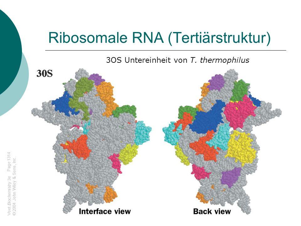 Voet Biochemistry 3e © 2004 John Wiley & Sons, Inc. Ribosomale RNA (Tertiärstruktur) 3OS Untereinheit von T. thermophilus Page 1314