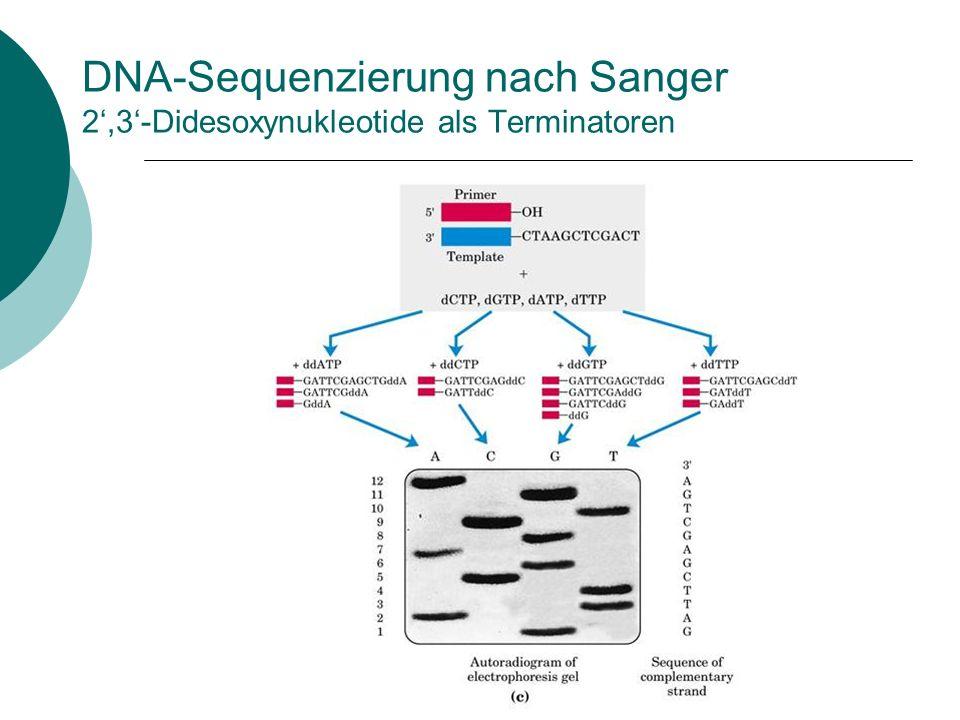 DNA-Sequenzierung nach Sanger 2,3-Didesoxynukleotide als Terminatoren