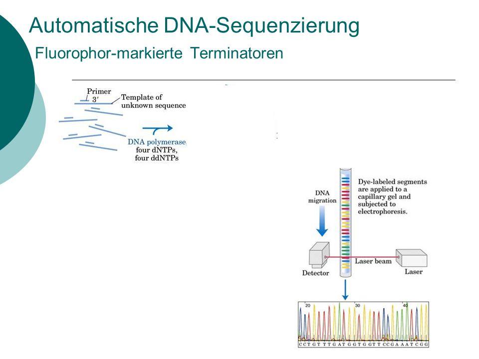 Automatische DNA-Sequenzierung Fluorophor-markierte Terminatoren