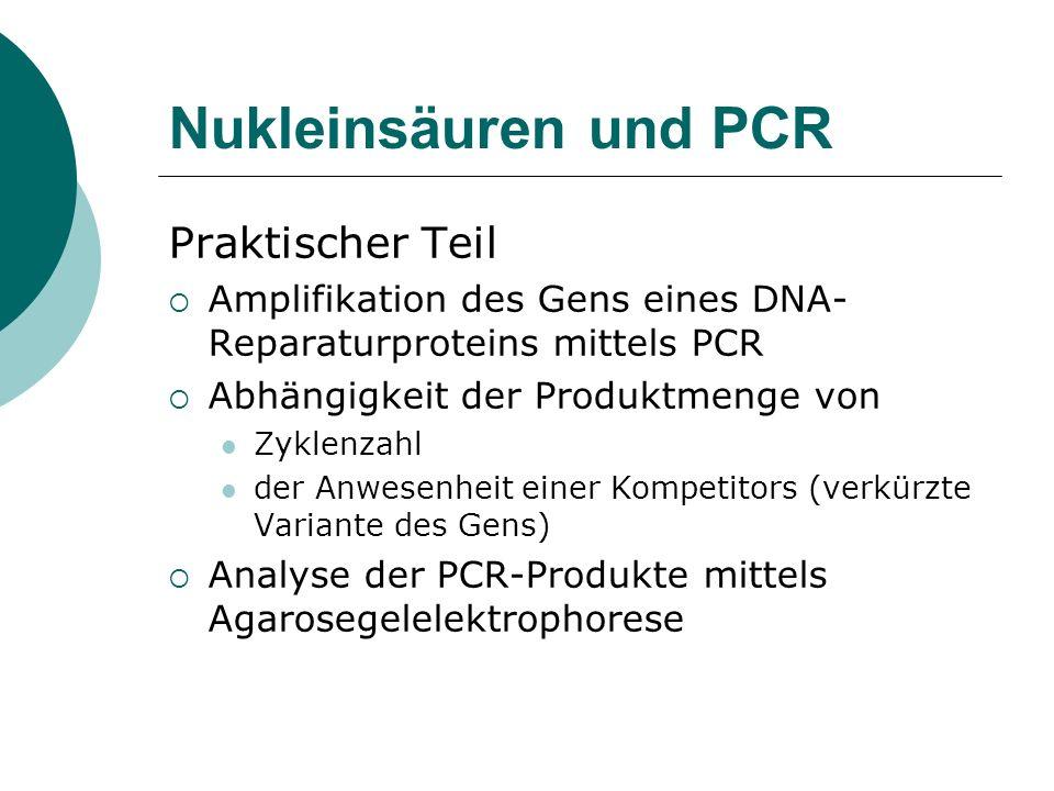 Nukleinsäuren und PCR Praktischer Teil Amplifikation des Gens eines DNA- Reparaturproteins mittels PCR Abhängigkeit der Produktmenge von Zyklenzahl de
