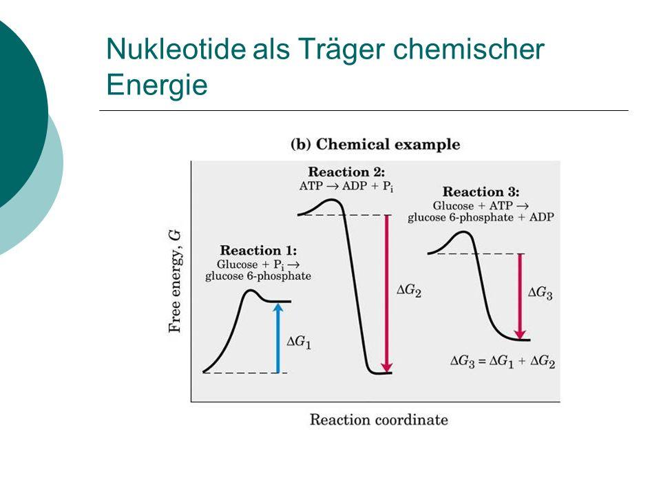 Nukleotide als Bestandteil von NAD+ und FAD