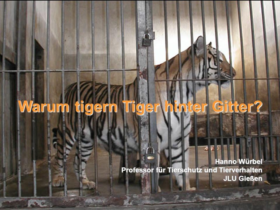 Stereotypien Warum tigern Tiger hinter Gitter? Hanno Würbel Professor für Tierschutz und Tierverhalten JLU Gießen
