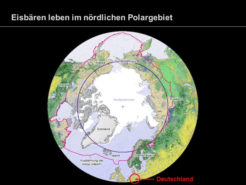 Eisbären leben im nördlichen Polargebiet Deutschland