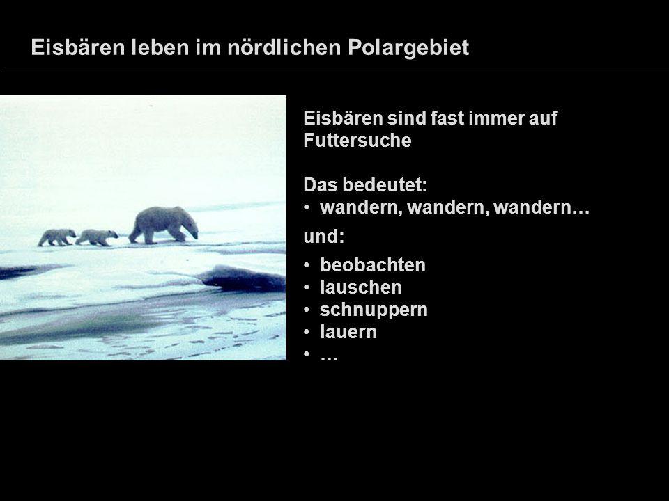 Eisbären leben im nördlichen Polargebiet Eisbären sind fast immer auf Futtersuche Das bedeutet: wandern, wandern, wandern… und: beobachten lauschen sc