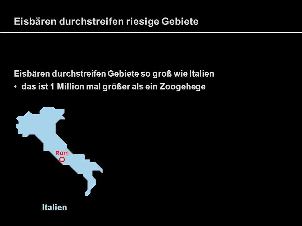 Eisbären durchstreifen riesige Gebiete Eisbären durchstreifen Gebiete so groß wie Italien das ist 1 Million mal größer als ein Zoogehege Italien Rom