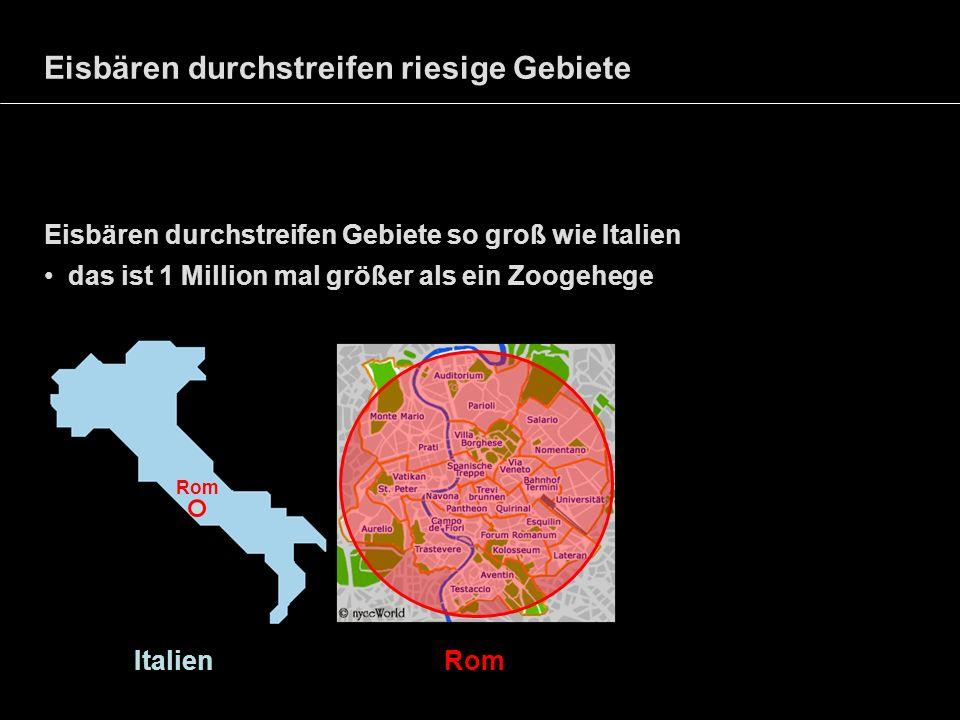 Eisbären durchstreifen riesige Gebiete Eisbären durchstreifen Gebiete so groß wie Italien das ist 1 Million mal größer als ein Zoogehege Italien Rom R