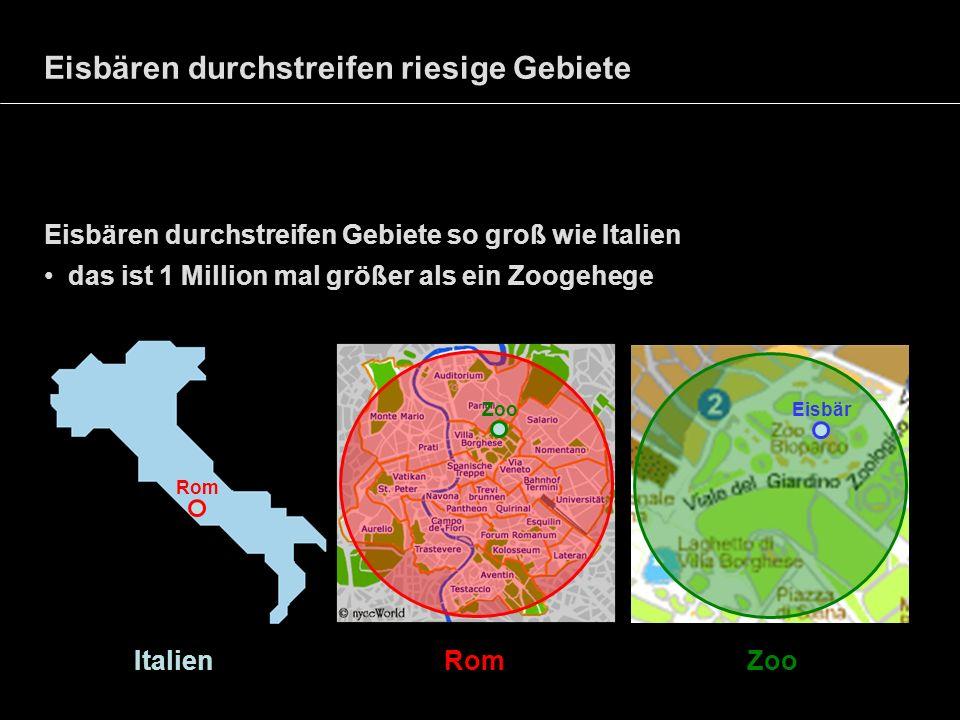 Eisbären durchstreifen riesige Gebiete Eisbären durchstreifen Gebiete so groß wie Italien das ist 1 Million mal größer als ein Zoogehege Italien Rom Z