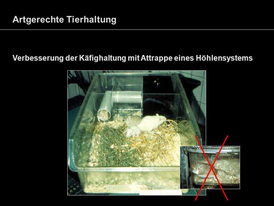 Artgerechte Tierhaltung Verbesserung der Käfighaltung mit Attrappe eines Höhlensystems