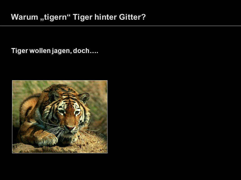Warum tigern Tiger hinter Gitter? Tiger wollen jagen, doch….