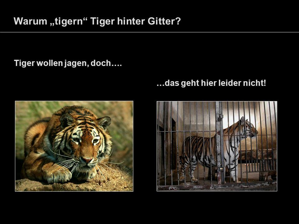 Warum tigern Tiger hinter Gitter? Tiger wollen jagen, doch…. …das geht hier leider nicht!