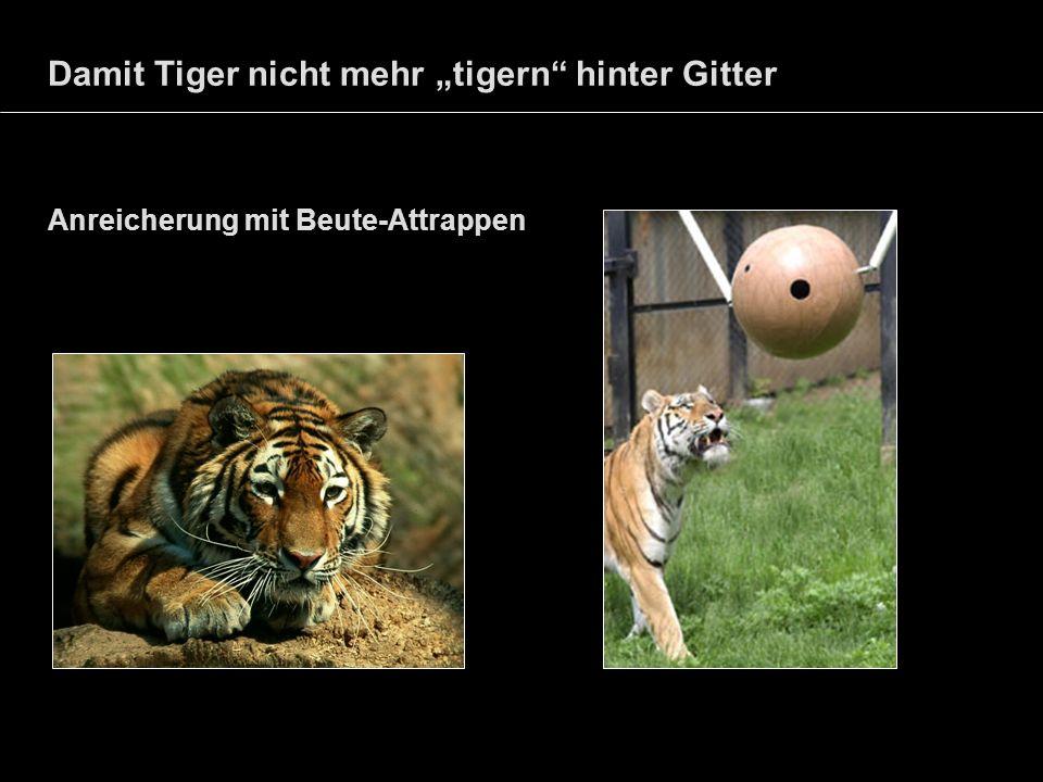 Damit Tiger nicht mehr tigern hinter Gitter Anreicherung mit Beute-Attrappen