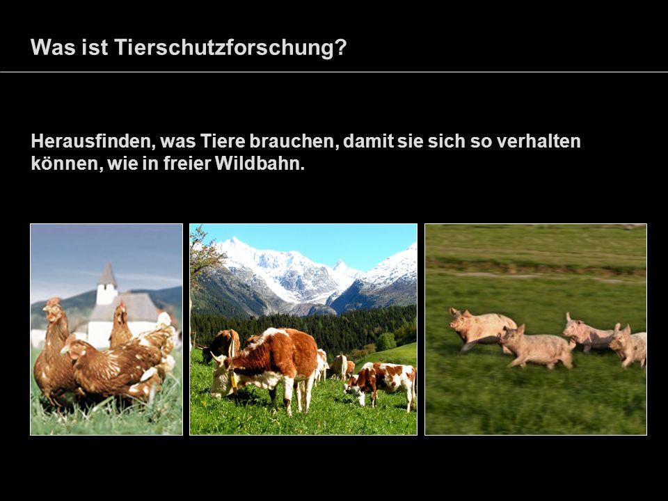 Was ist Tierschutzforschung? Herausfinden, was Tiere brauchen, damit sie sich so verhalten können, wie in freier Wildbahn.