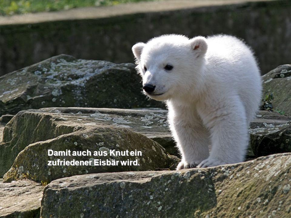 Damit auch aus Knut ein zufriedener Eisbär wird.