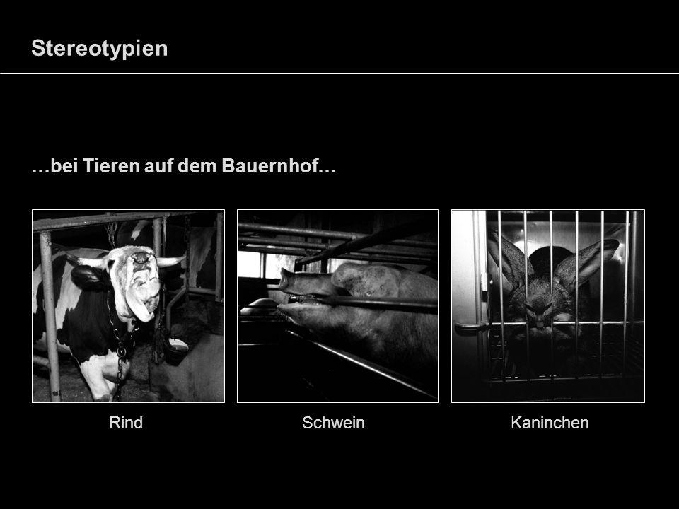 Stereotypien …bei Tieren auf dem Bauernhof… Rind Schwein Kaninchen