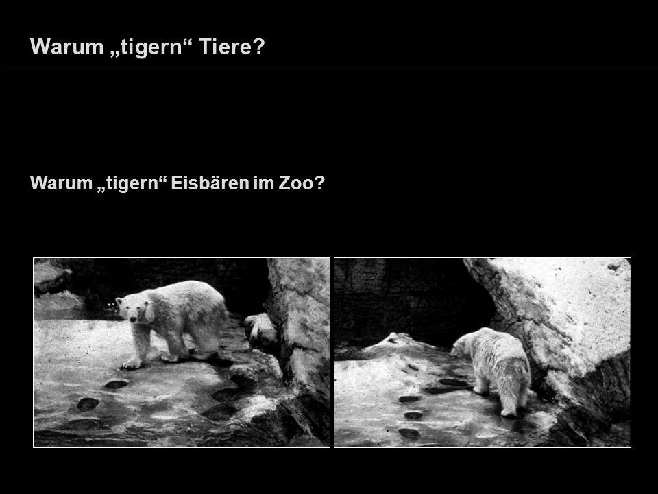 Warum tigern Tiere? Warum tigern Eisbären im Zoo?