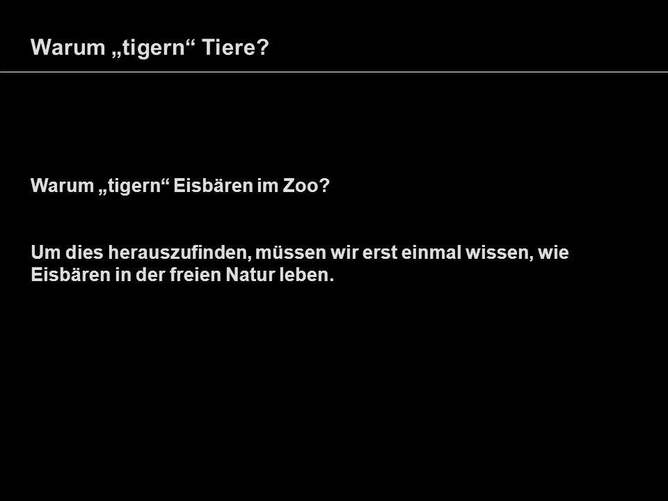 Warum tigern Tiere? Warum tigern Eisbären im Zoo? Um dies herauszufinden, müssen wir erst einmal wissen, wie Eisbären in der freien Natur leben.