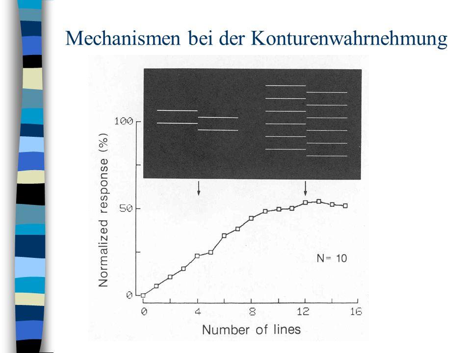 Mechanismen bei der Konturenwahrnehmung