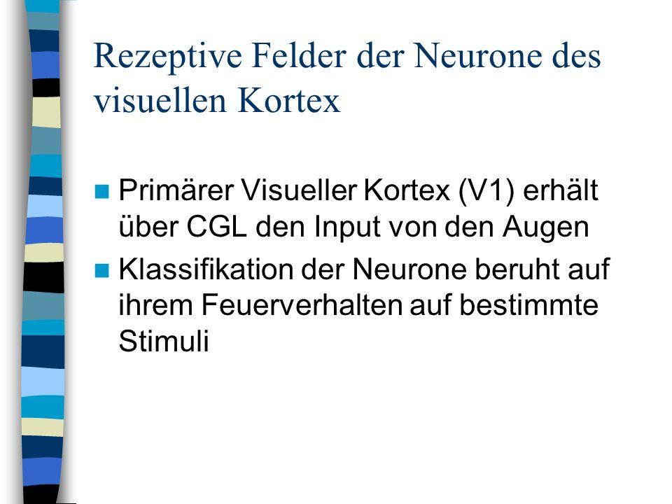 Rezeptive Felder der Neurone des visuellen Kortex Primärer Visueller Kortex (V1) erhält über CGL den Input von den Augen Klassifikation der Neurone be