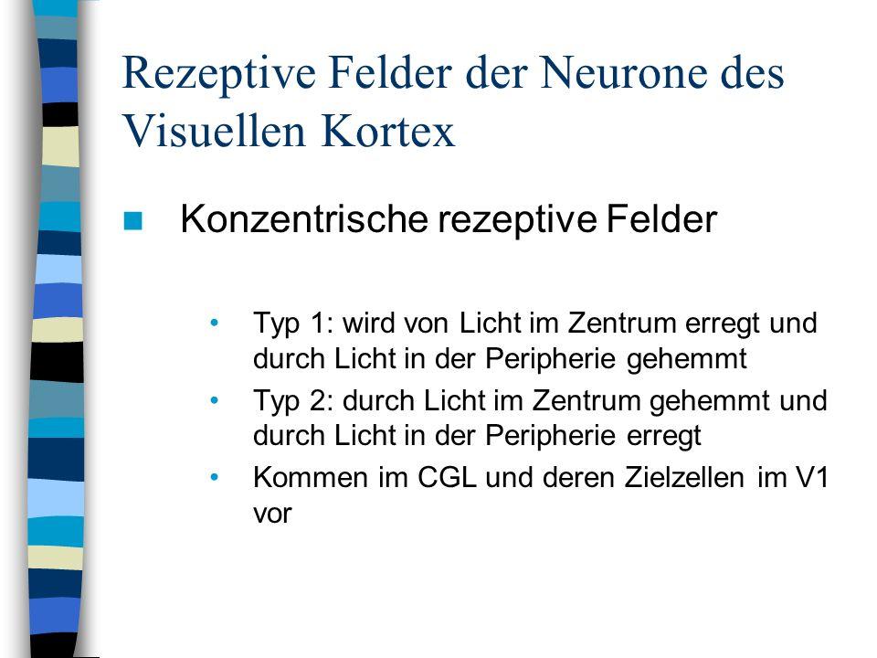 Rezeptive Felder der Neurone des Visuellen Kortex Konzentrische rezeptive Felder Typ 1: wird von Licht im Zentrum erregt und durch Licht in der Periph