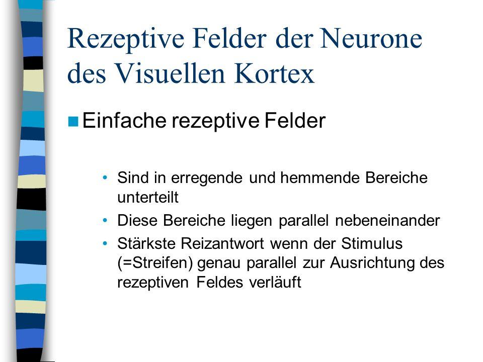 Rezeptive Felder der Neurone des Visuellen Kortex Einfache rezeptive Felder Sind in erregende und hemmende Bereiche unterteilt Diese Bereiche liegen p