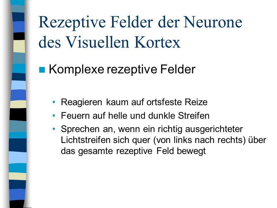 Rezeptive Felder der Neurone des Visuellen Kortex Komplexe rezeptive Felder Reagieren kaum auf ortsfeste Reize Feuern auf helle und dunkle Streifen Sp