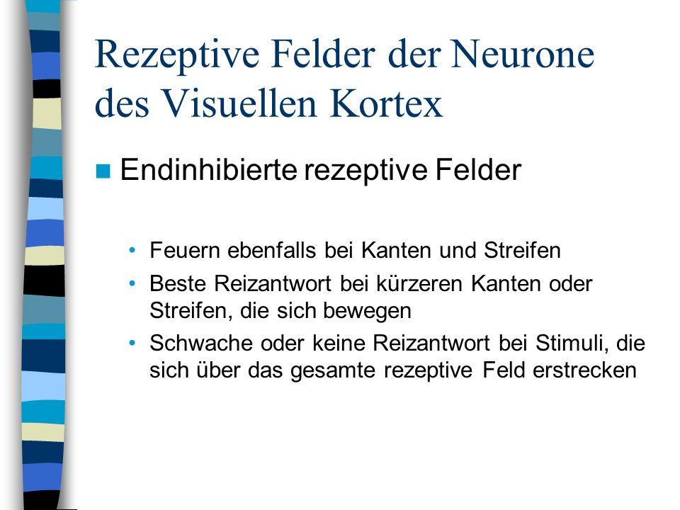 Rezeptive Felder der Neurone des Visuellen Kortex Endinhibierte rezeptive Felder Feuern ebenfalls bei Kanten und Streifen Beste Reizantwort bei kürzer