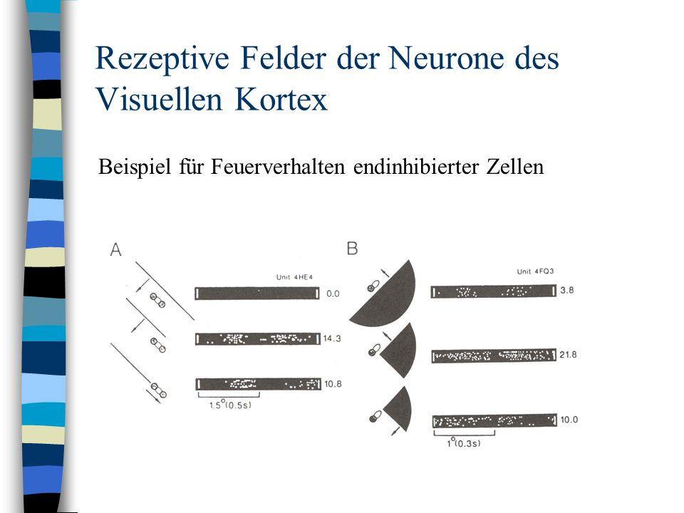 Rezeptive Felder der Neurone des Visuellen Kortex Beispiel für Feuerverhalten endinhibierter Zellen