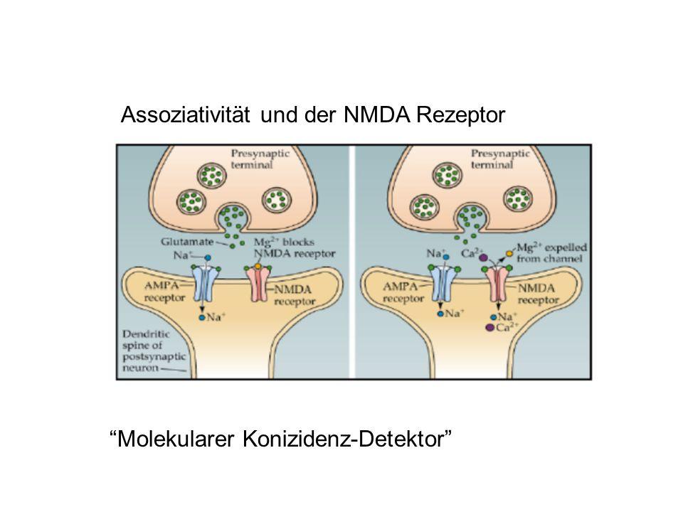 Assoziativität und der NMDA Rezeptor Molekularer Konizidenz-Detektor