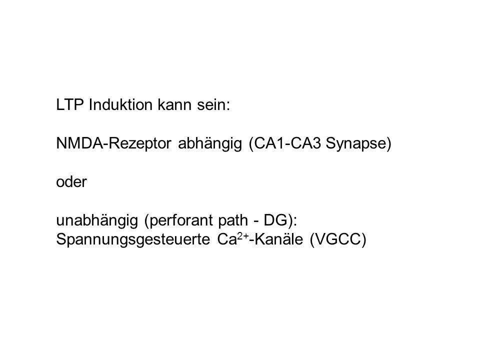 LTP Induktion kann sein: NMDA-Rezeptor abhängig (CA1-CA3 Synapse) oder unabhängig (perforant path - DG): Spannungsgesteuerte Ca 2+ -Kanäle (VGCC)