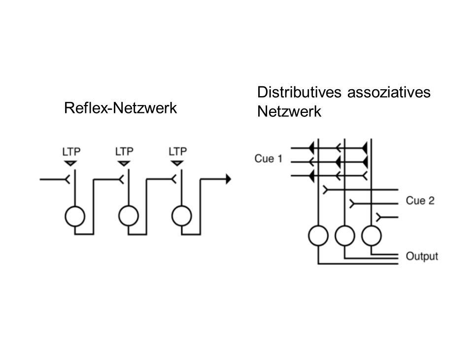 Reflex-Netzwerk Distributives assoziatives Netzwerk