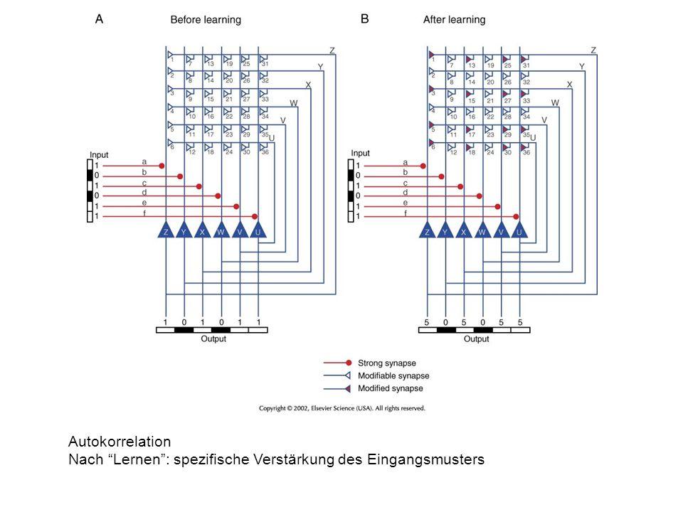 Autokorrelation Nach Lernen: spezifische Verstärkung des Eingangsmusters