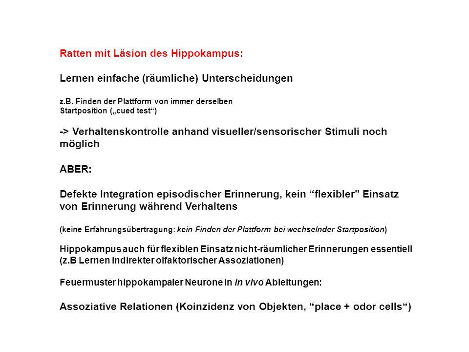 Ratten mit Läsion des Hippokampus: Lernen einfache (räumliche) Unterscheidungen z.B.