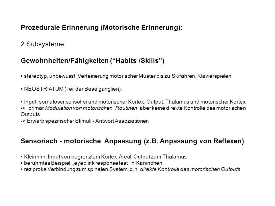 Prozedurale Erinnerung (Motorische Erinnerung): 2 Subsysteme: Gewohnheiten/Fähigkeiten (Habits /Skills) stereotyp, unbewusst, Verfeinerung motorischer Muster bis zu Skifahren, Klavierspielen NEOSTRIATUM (Teil der Basalganglien): Input: somatosensorischer und motorischer Kortex; Output: Thalamus und motorischer Kortex -> primär Modulation von motorischen Routinen aber keine direkte Kontrolle des motorischen Outputs -> Erwerb spezifischer Stimuli - Antwort Assoziationen Sensorisch - motorische Anpassung (z.B.