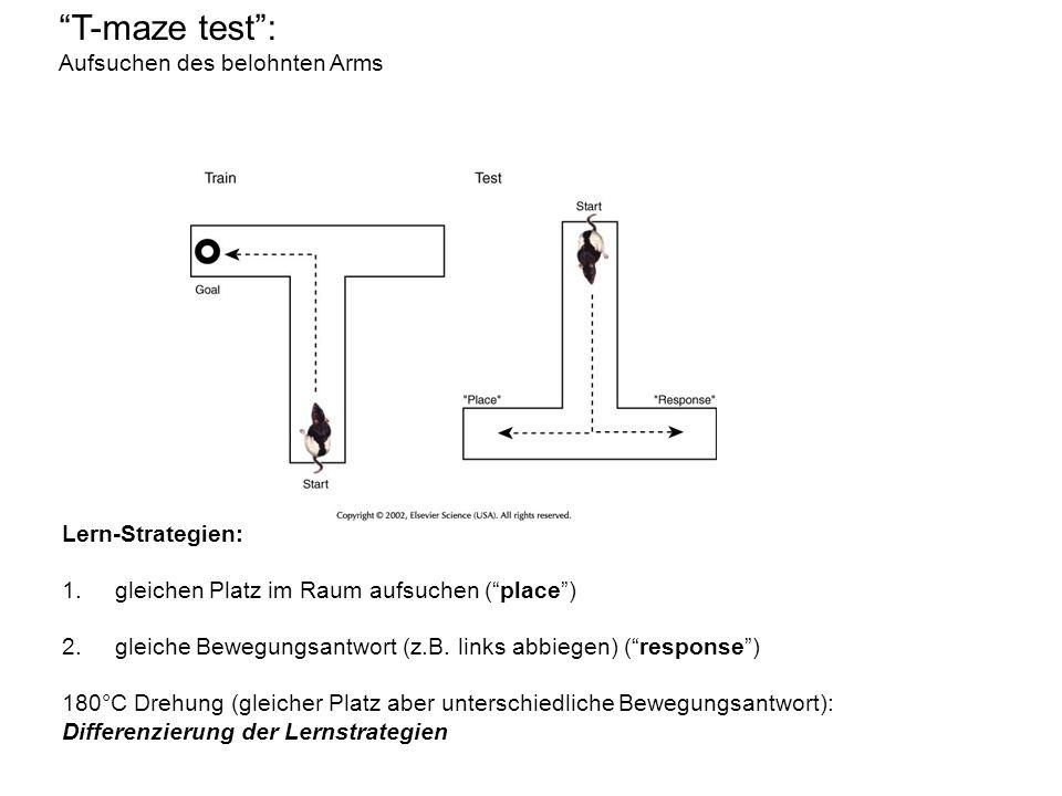 T-maze test: Aufsuchen des belohnten Arms Lern-Strategien: 1.gleichen Platz im Raum aufsuchen (place) 2.gleiche Bewegungsantwort (z.B.