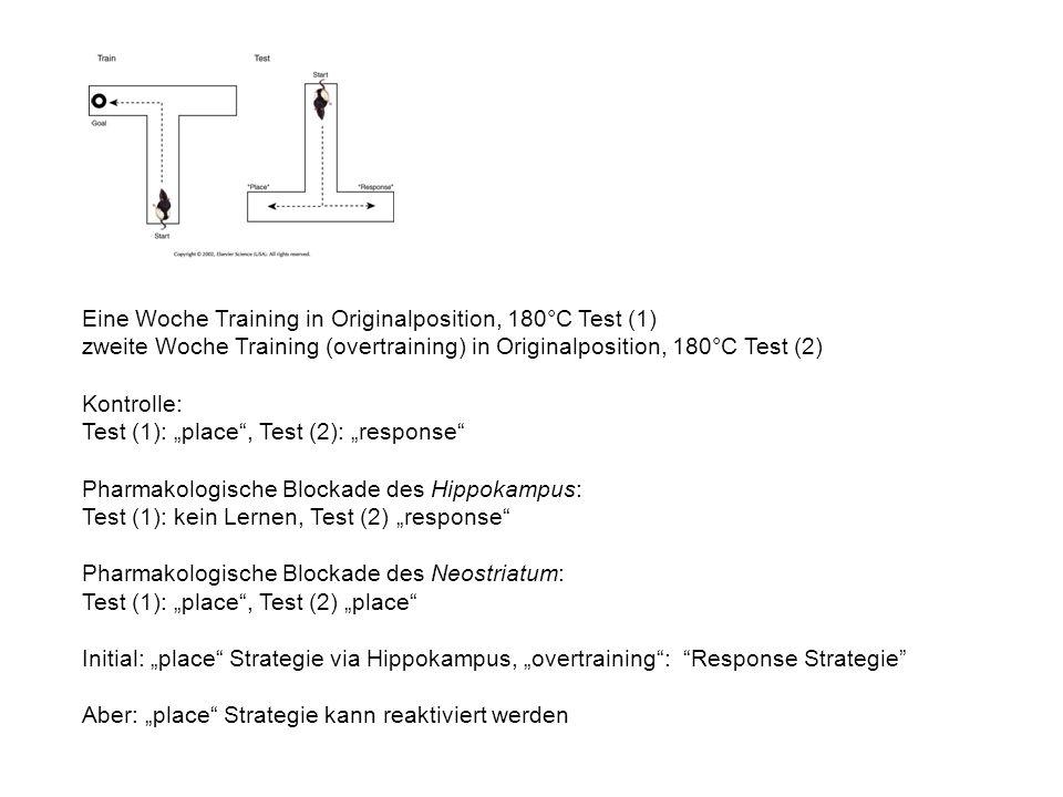 Eine Woche Training in Originalposition, 180°C Test (1) zweite Woche Training (overtraining) in Originalposition, 180°C Test (2) Kontrolle: Test (1): place, Test (2): response Pharmakologische Blockade des Hippokampus: Test (1): kein Lernen, Test (2) response Pharmakologische Blockade des Neostriatum: Test (1): place, Test (2) place Initial: place Strategie via Hippokampus, overtraining: Response Strategie Aber: place Strategie kann reaktiviert werden