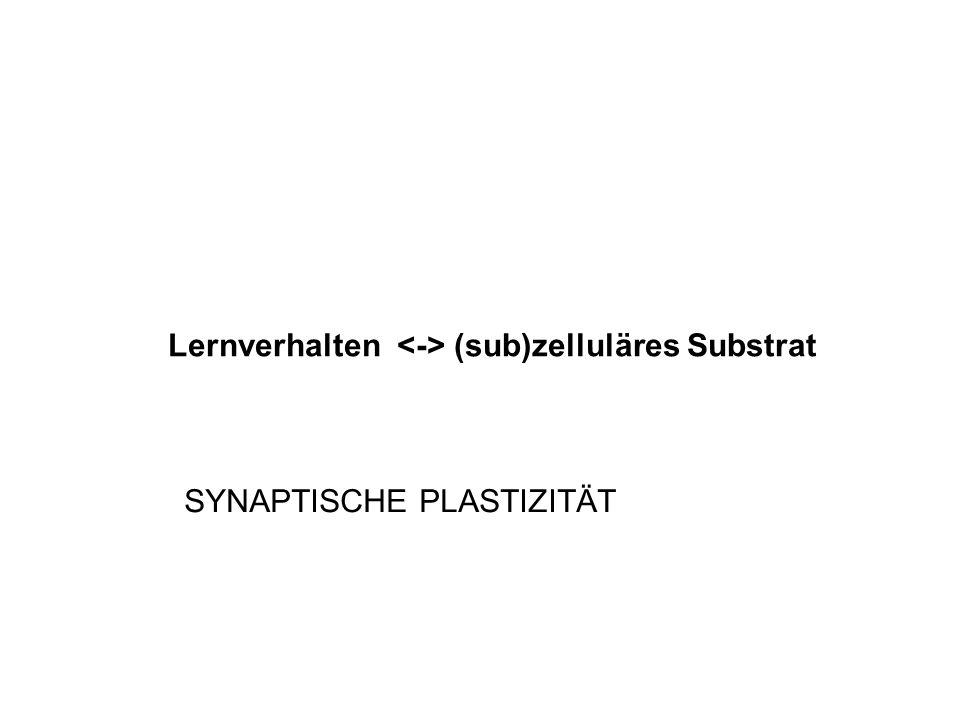 Lernverhalten (sub)zelluläres Substrat SYNAPTISCHE PLASTIZITÄT