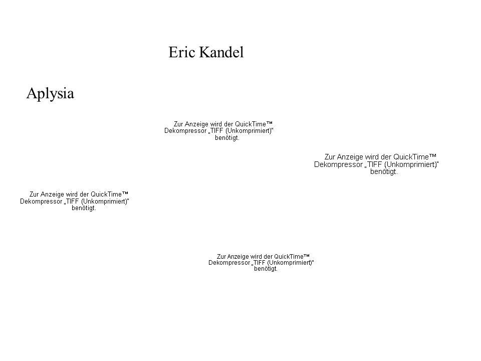 Aplysia Eric Kandel