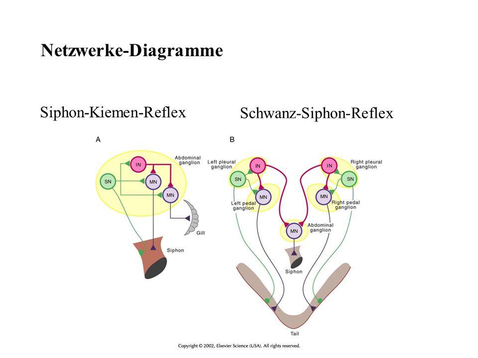 Netzwerke-Diagramme Siphon-Kiemen-Reflex Schwanz-Siphon-Reflex