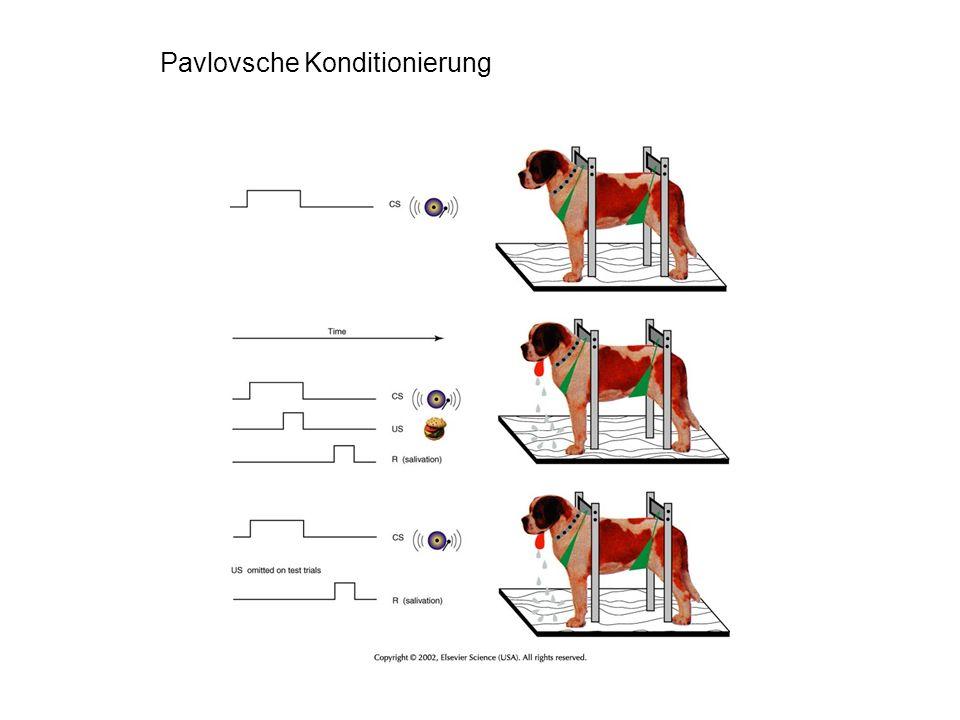 Pavlovsche Konditionierung