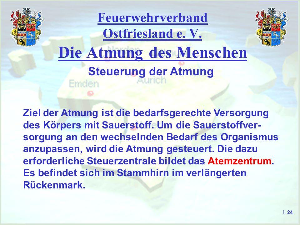 Feuerwehrverband Ostfriesland e. V. Die Atmung des Menschen I. 24 Steuerung der Atmung Ziel der Atmung ist die bedarfsgerechte Versorgung des Körpers