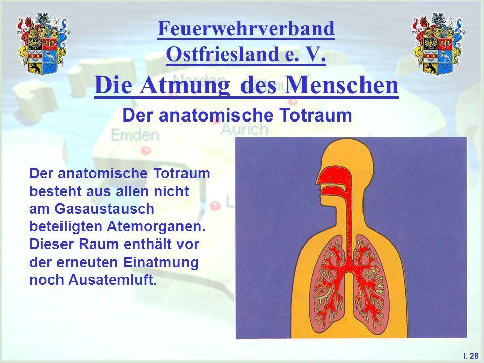 Feuerwehrverband Ostfriesland e. V. Die Atmung des Menschen I. 28 Der anatomische Totraum Der anatomische Totraum besteht aus allen nicht am Gasaustau