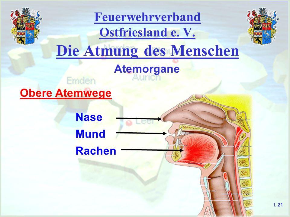 Feuerwehrverband Ostfriesland e. V. Die Atmung des Menschen I. 21 Atemorgane Obere Atemwege Nase Mund Rachen