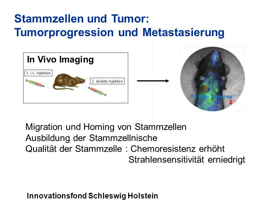 Migration und Homing von Stammzellen Ausbildung der Stammzellnische Qualität der Stammzelle : Chemoresistenz erhöht Strahlensensitivität erniedrigt Stammzellen und Tumor: Tumorprogression und Metastasierung Innovationsfond Schleswig Holstein In Vivo Imaging