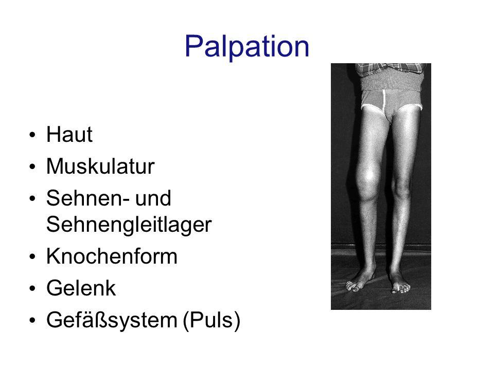 Palpation Haut Muskulatur Sehnen- und Sehnengleitlager Knochenform Gelenk Gefäßsystem (Puls)