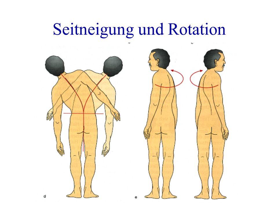 Seitneigung und Rotation