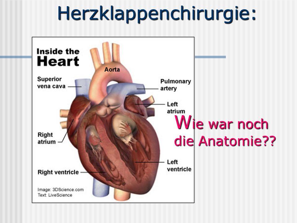 Herzklappenchirurgie: W ie war noch die Anatomie??
